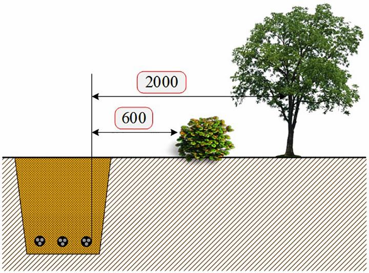 Дистанция от подземного кабеля для многолетних растений