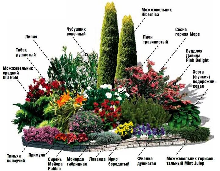 Композиция из кустарников и цветов