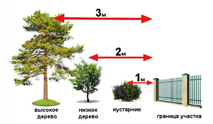 Нормы расстояния от растений до забора