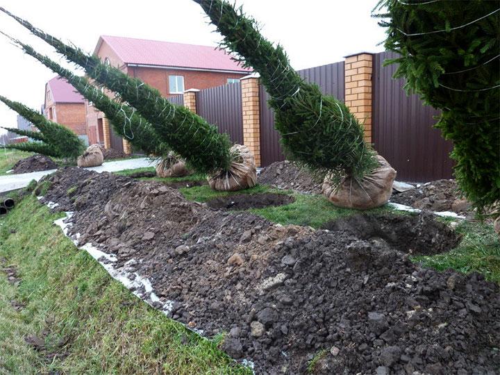 Процесс посадки деревьев на участке