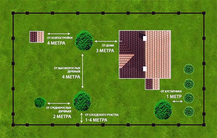 Расположение растений на дачном участке