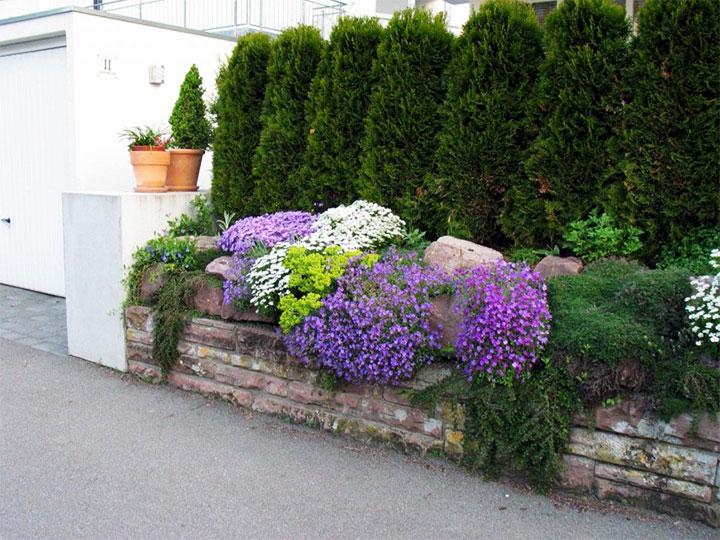 Растения вдоль забора со стороны улицы