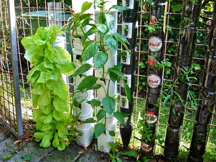 Вертикальный сад на ограде из рабицы