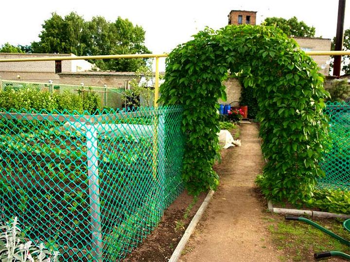 Зонирование огорода