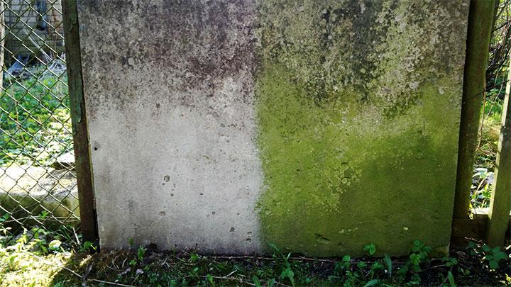 Плесень на бетонном заборе