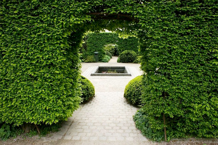 Зеленая декоративная арка