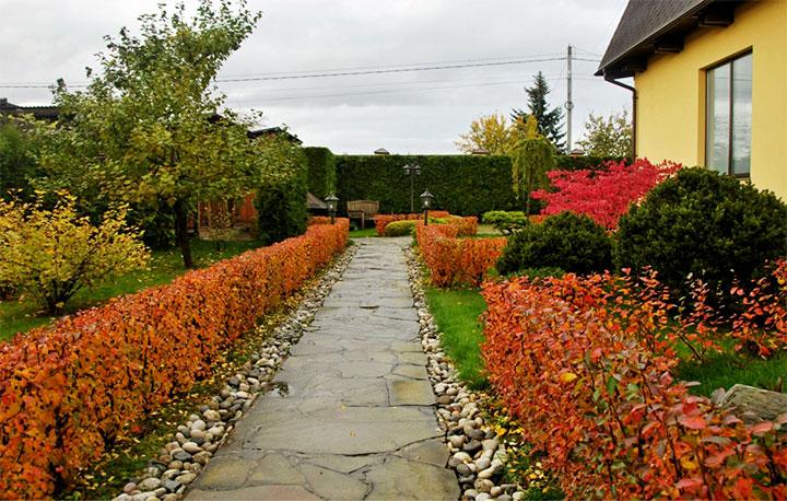 Декоративная ограда из кустарника