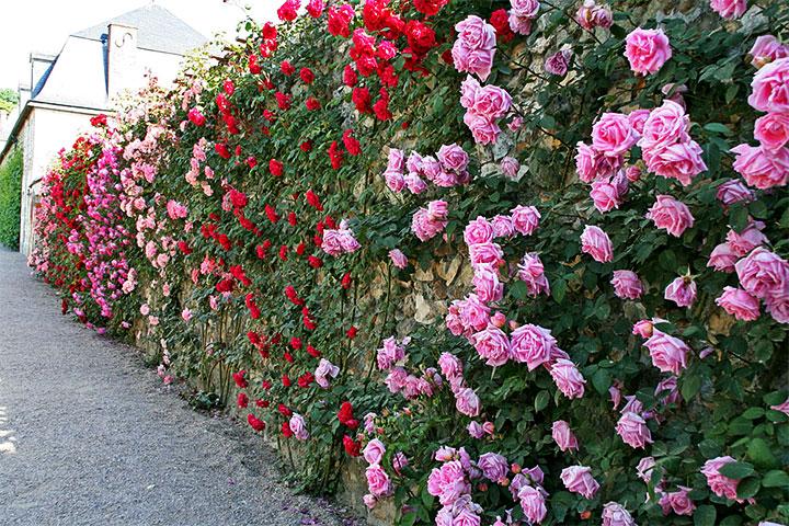 Декорирование забора розам
