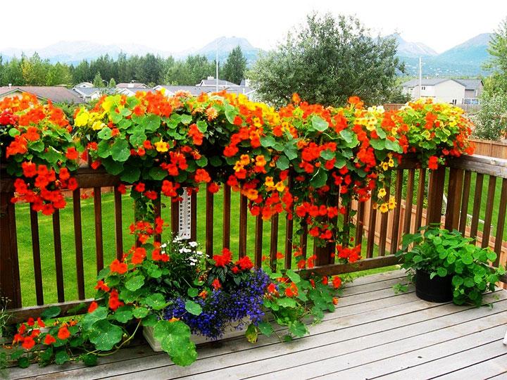 Вьющиеся растения на веранде