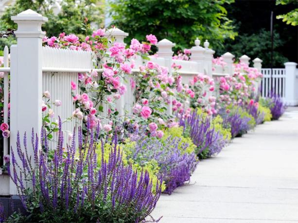 Цветы посаженные вдоль забора