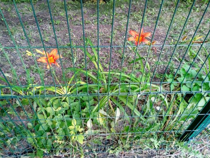 Изгородь из сетки с полимерным покрытием