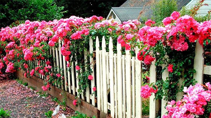 Забор из штакетника декорированный цветами