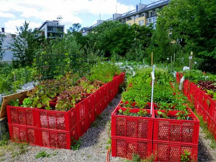 Огород из пластиковых ящиков