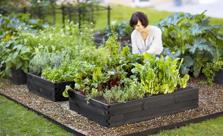 Выращивание культурных растений