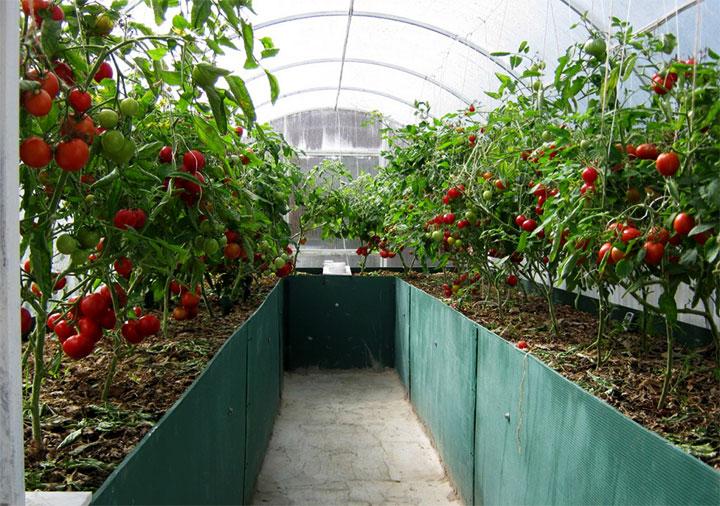 Высокие грядки под помидоры